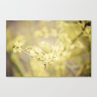Bask in the Warmth Canvas Print