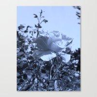 Roses IX Canvas Print
