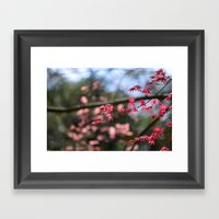 Japanese Maple II Framed Art Print