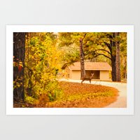 Visitor At The Park Art Print