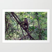 Monkey Sanctuary – Monkey with attitude Art Print