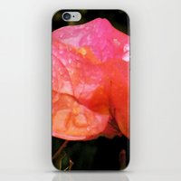 Coral Dreams iPhone & iPod Skin