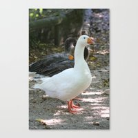 French Goose Canvas Print