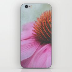 Purple Coneflower iPhone & iPod Skin
