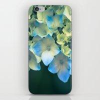 Peek -A- Blue iPhone & iPod Skin