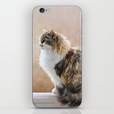 Cat on a Rail iPhone & iPod Skin