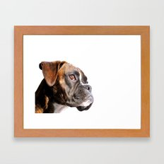 boxer dog portrait Framed Art Print
