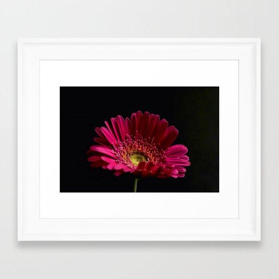 Pink Gerbera Daisy 2 Framed Art Print