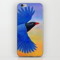 Taiwan Blue Magpie(1) iPhone & iPod Skin