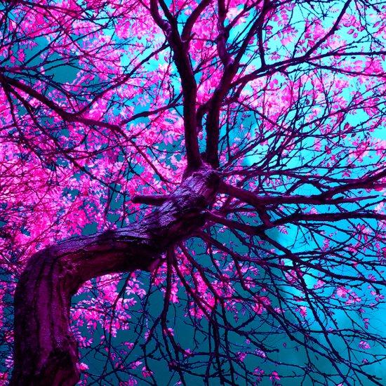 purple tree XII Canvas Print