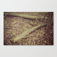 Floor Of The Forrest  Canvas Print