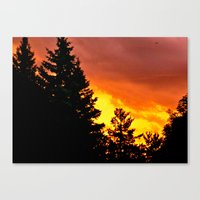 Sunset Pines Canvas Print