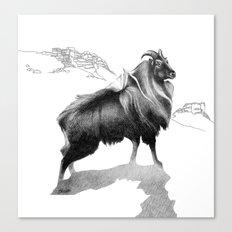 Tahr / Thar Canvas Print
