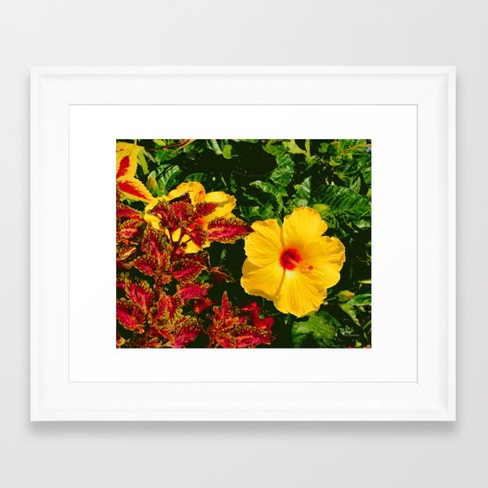 Hibiscus and Coleus Framed Art Print