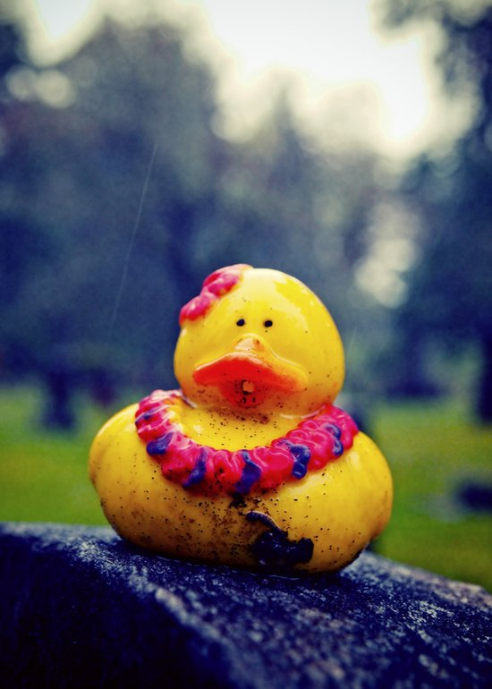 Lonely duck Art Print