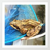 Frog on netting Art Print