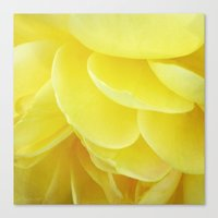 Petals In Yellow Canvas Print