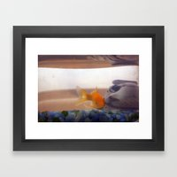 Fish In Trouble Framed Art Print