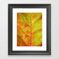 Autumn Colors III Framed Art Print