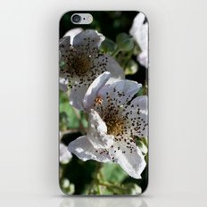Blackberry Blossom iPhone & iPod Skin