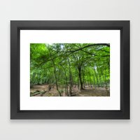 The Ancient English Forest Framed Art Print