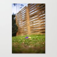 shrunk Canvas Print