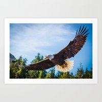 King Of The Skies Art Print