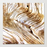 Organic design Tree Wood Grain Driftwood natures pattern Canvas Print