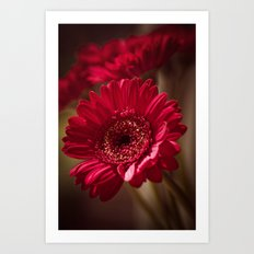 Beautiful Red Gerbera Art Print