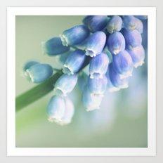Blue Spring Beauty Art Print