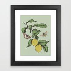 Lemons in Spring Framed Art Print