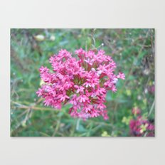 Bunch Canvas Print