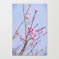 Portuguese Blossoms Canvas Print