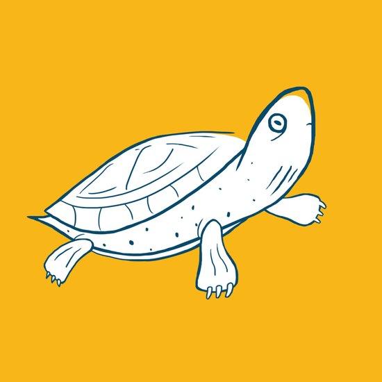 Turtle Art Print