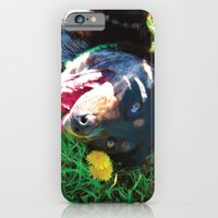 iPhone & iPod Case featuring Dog Tanning by Robert Wacker