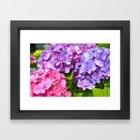 Cape Hydrangeas Framed Art Print