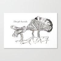 Clitocybe Brumalis // Ha… Canvas Print