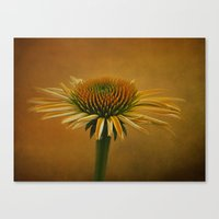 Dressed in Color Canvas Print