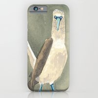 iPhone & iPod Case featuring blue footed booby by Reneé Leigh Stephenson