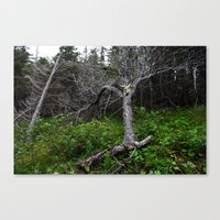 Forest Spirit (Full Imag… Canvas Print
