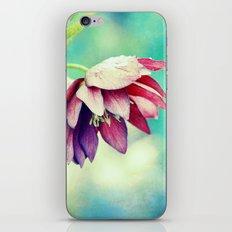 Black hellebore iPhone & iPod Skin