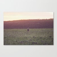 Kangaroo at Sunset Canvas Print