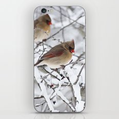 Female Cardinal iPhone & iPod Skin