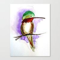 Hummingbird A Canvas Print