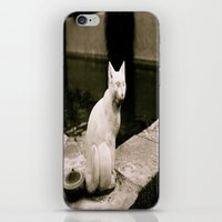 Concrete Cat iPhone & iPod Skin