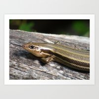 relaxed skink Art Print