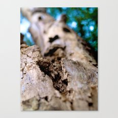 Dying trunk. Canvas Print