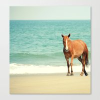 Wild Mustang Of Carova, … Canvas Print