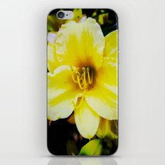 Slow Wilting Beauty iPhone & iPod Skin