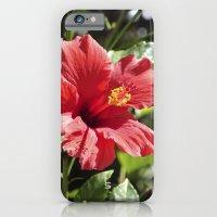 Hibiscus V iPhone 6 Slim Case